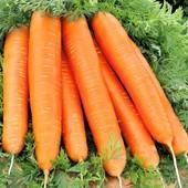 Морковь Красный великан 200 семян