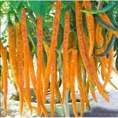 Перец сладкий Сигарелла оранжевая
