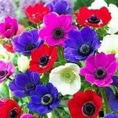 Набор мелколуковичных цветов. 6 луковиц в лоте!!!! .