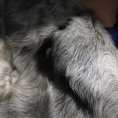 Шуба из молодого ягненка р 44-48