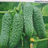 Голландские семена огурцов. До 2025года.Один сорт на выбор