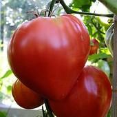 """100 семян!!! Томат """" Бычье сердце"""" малиновое или красное- на выбор! До 2025"""