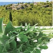Прованские травы. Настоящая итальянская руккола. 400 семян!!!