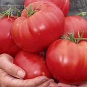 Великан-Голиаф -Мясистые, сахаристые, содержащие мало семян вес до 1 кг