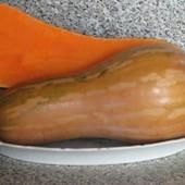Тыква мускатная -источник каротина и природный антиоксидант! В лоте 25+свежесобранных семян!!!