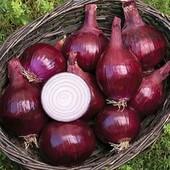 """Лук """"Халцедон"""" или лук """" Ред Барон"""" - на выбор!!! Полноценный большой лук из семян в первый год!"""