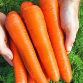 Семена моркови Королева осени. Поздняя, хранится 8-9 мес. Урожайная!!!
