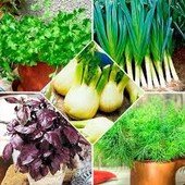 """Набор семян """" Пряности для салатов"""" 4 упаковки + 1 в подарок!!!! До 2025"""