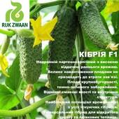 Огурец Кибрия F1 партенокарпический (Rijk Zwaan) . Лот 10 семян.