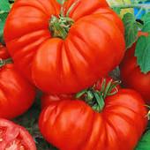 """Томат """"Брутус"""". Плоды - гиганты до 2 кг!!!Самый лучший для салатов и томат. сока! До 10 кг с куста!"""