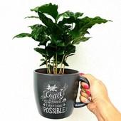 Кофе Арабика.Семена 5 шт . Последняя пачка