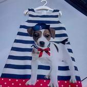 Стоп!!фирменное красивое яркое удобное нарядное платье от h&m