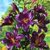 Собирайте лоты!! лилия дерево-гигант Purple Prince. Эксклюзив.Сильноароматная красотка.